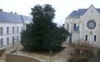 Le plus vieil arbre de Cholet